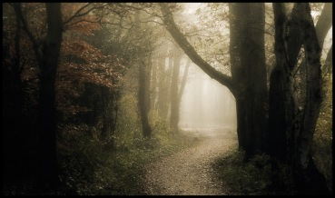 forest_path_____by_mosredna