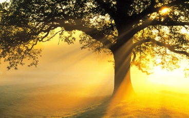 sunlight-rays-wallpaper-4